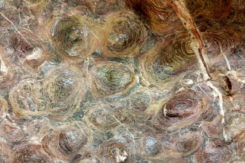 Stromatolith, Präkambrium (1,2 Milliarden Jahre) Shandong Provinz, China, Paläontologische Staatssammlung München © Beatrice Voigt
